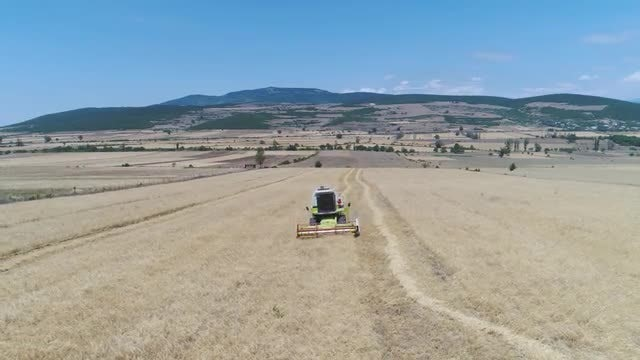 Combine Harvester On Wheat Farm: Stock Video