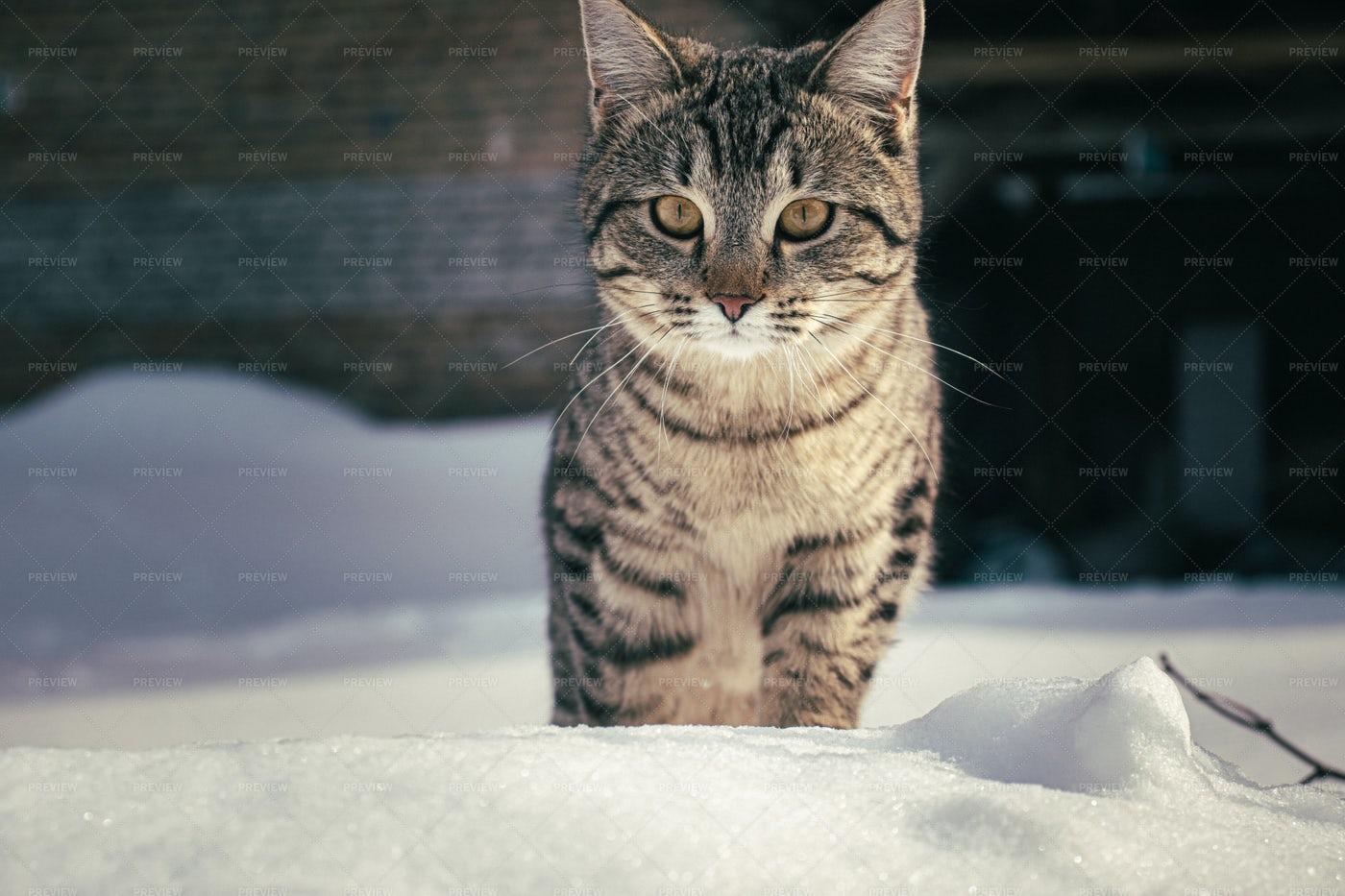 Cat In The Snow: Stock Photos