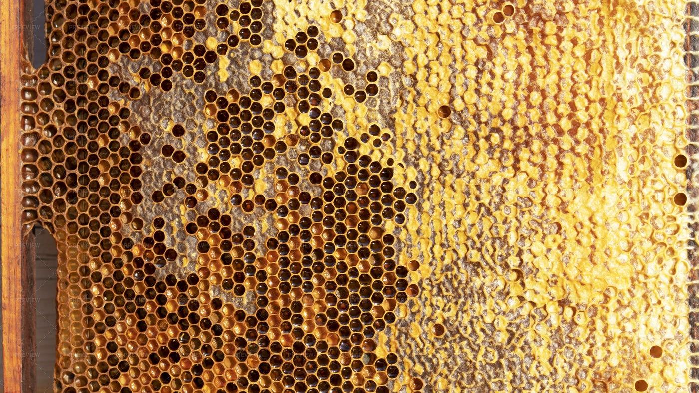 Honeycomb With Sweet Honey: Stock Photos