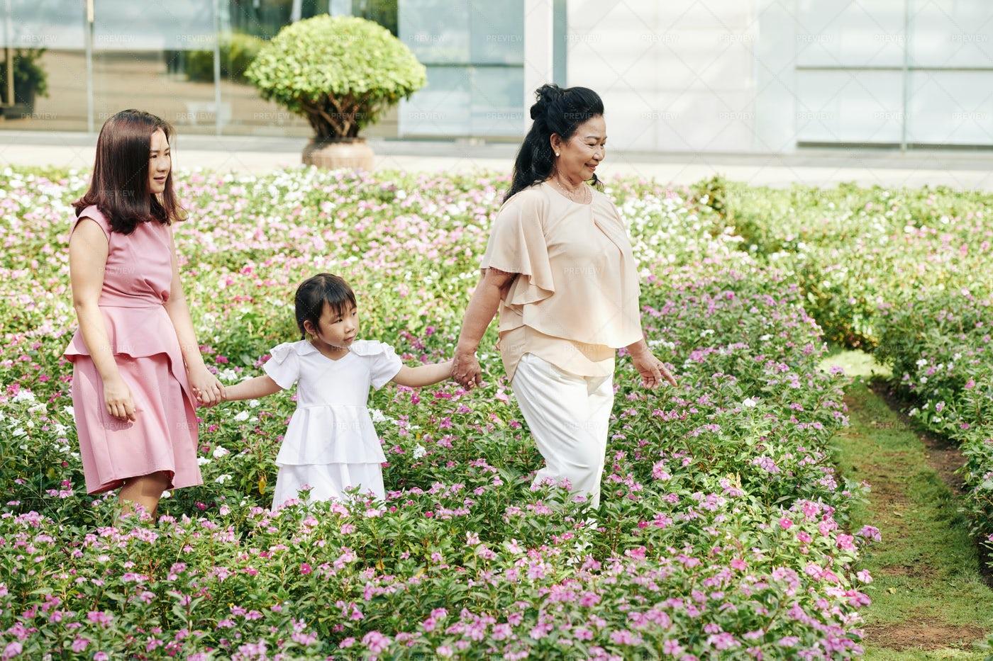 Family Walking In Park: Stock Photos