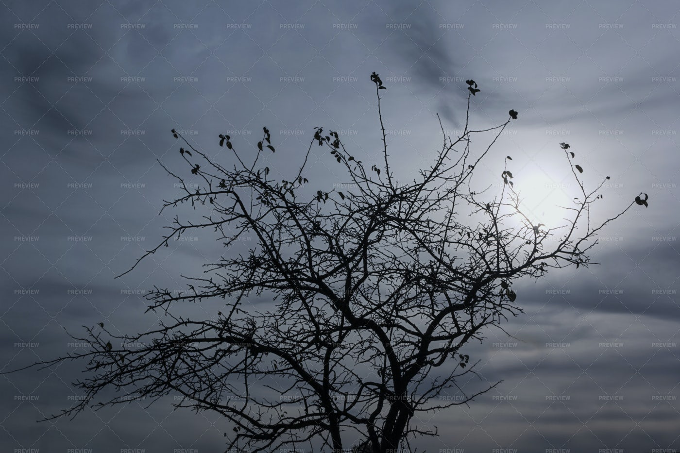 Silhouette Of A Tree: Stock Photos