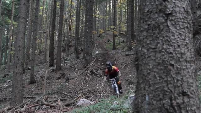 Mountain Biker Riding In Forest: Stock Video