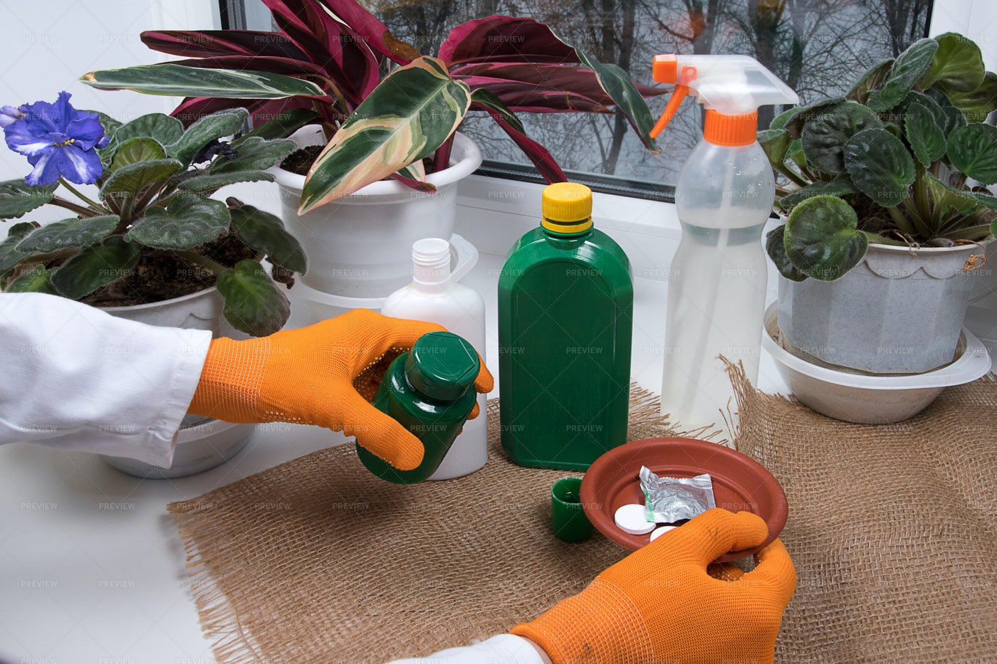 Agronomist Engineer Mixing Chemicals: Stock Photos