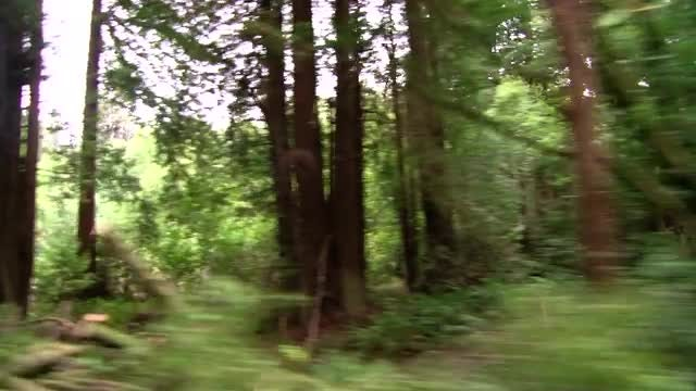 Driving Through The Forest: Stock Video