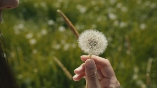 Girl Blowing On Dandelion: Stock Video