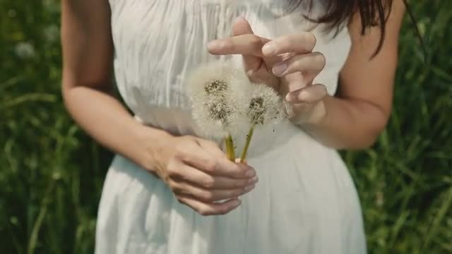Bouquet Of White Dandelions: Stock Video
