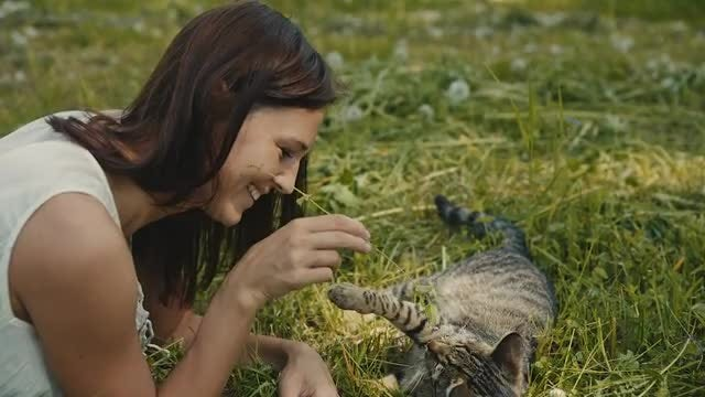 Woman Playing With A Cat: Stock Video
