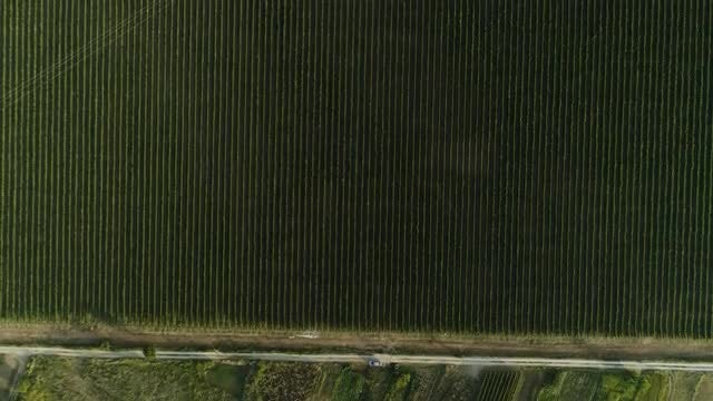 Aerial Shot Of A Vineyard  : Stock Video