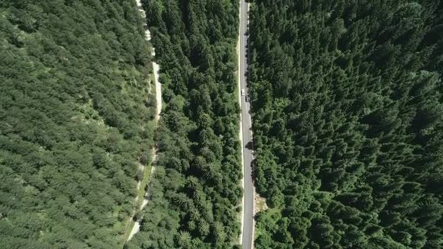 Road In A Thick Forest: Stock Video