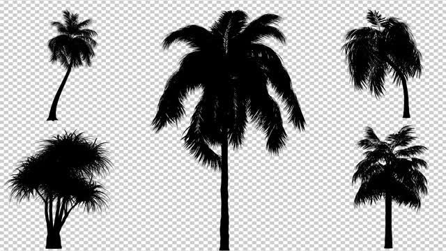 Palm Trees Swaying Pack: Stock Motion Graphics