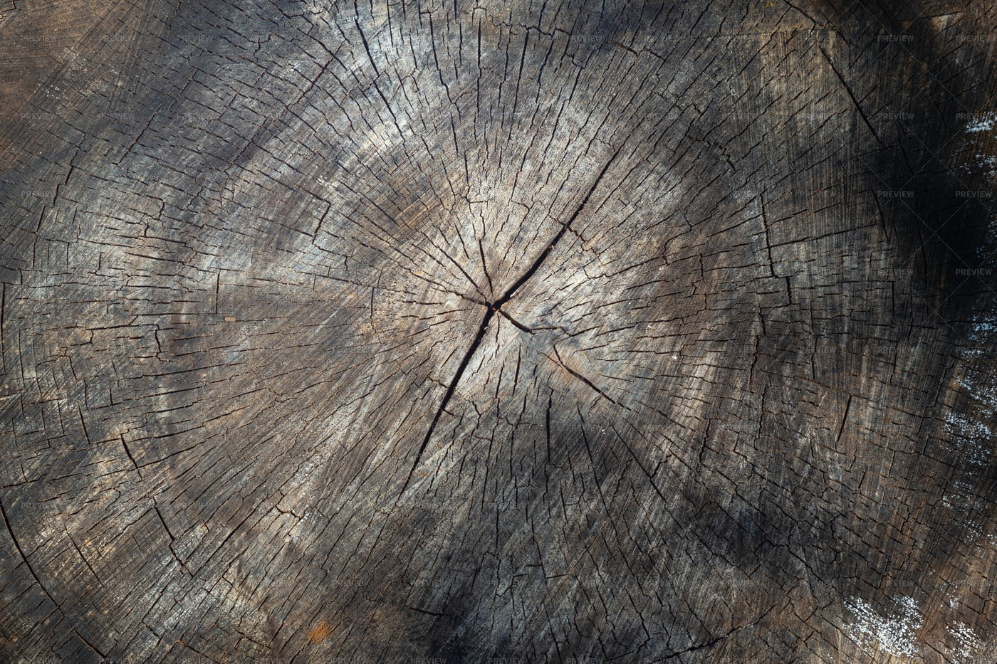 Old Sawn Tree Background: Stock Photos