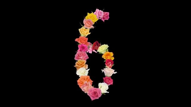 Montage of Roses in Number 6 Shape: Stock Video