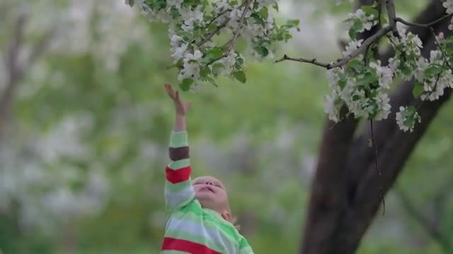 Child Reaches For Flowers: Stock Video