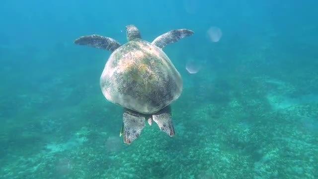Turtle Swimming In Ocean: Stock Video