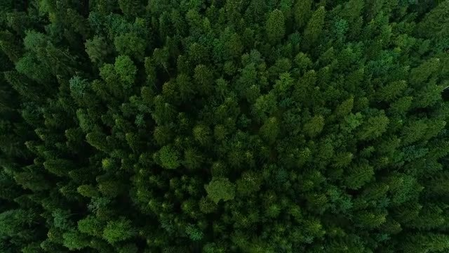 Tops Of Trees In Forest: Stock Video