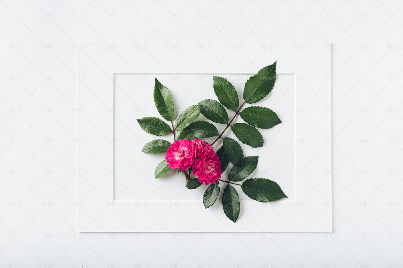 Flower Framed: Stock Photos