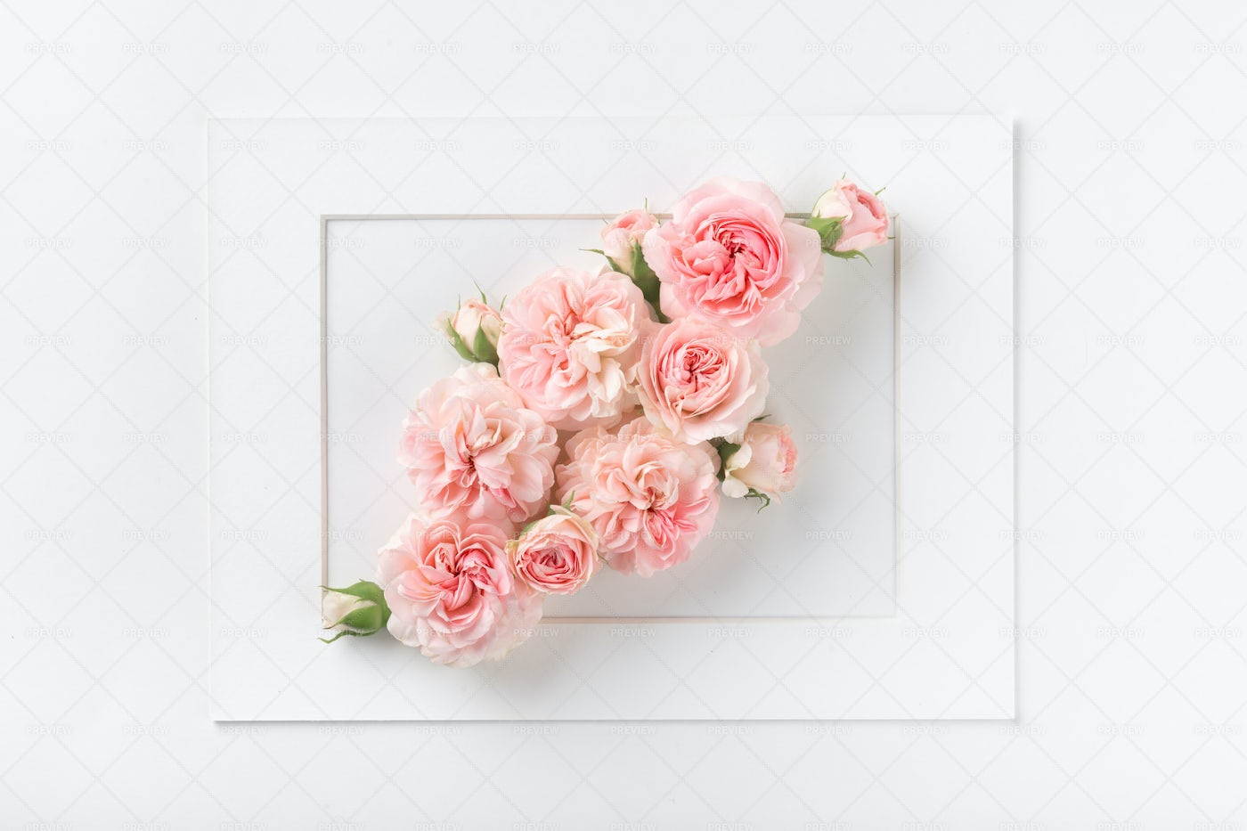 Rose Flowers In A Frame: Stock Photos