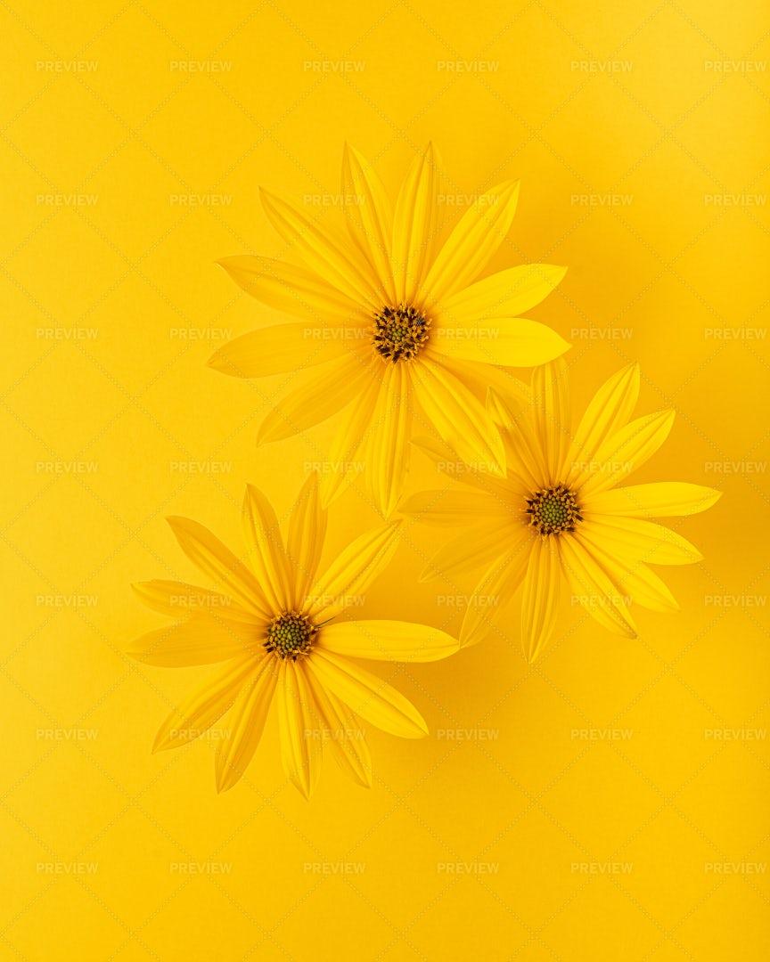 Three Yellow Flowers: Stock Photos