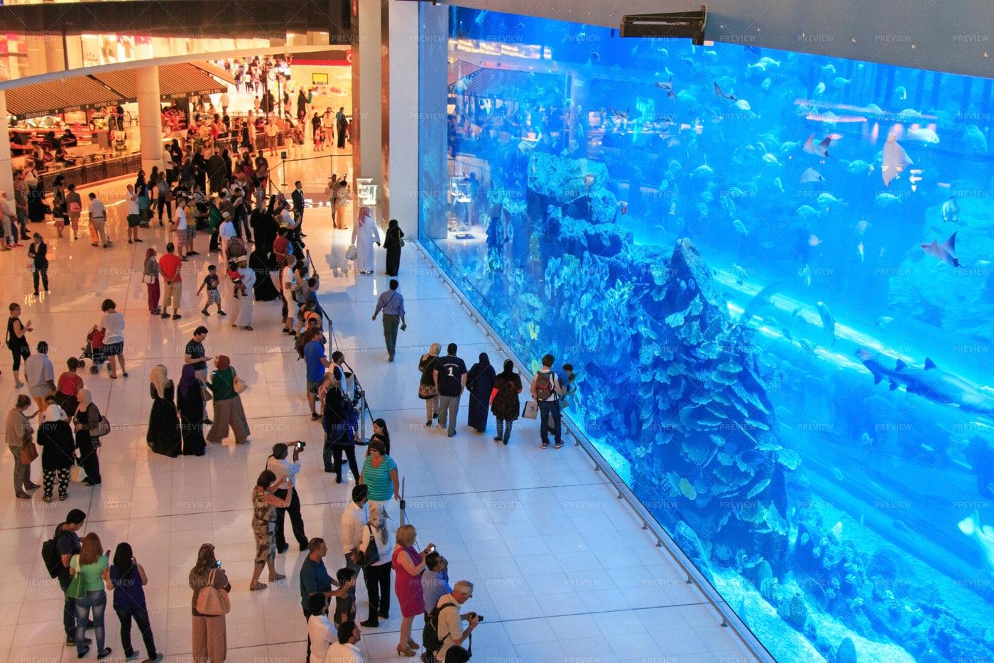 Aquarium In Dubai Mall: Stock Photos