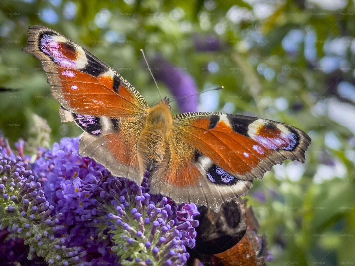 Orange Butterfly: Stock Photos