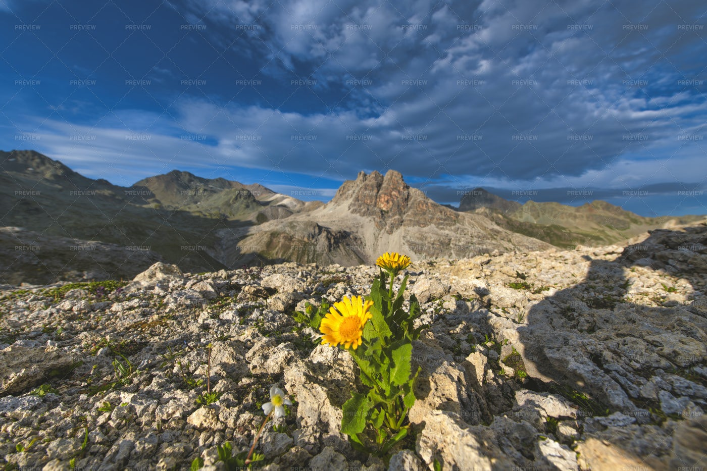 Flowers Sprouting Among Rocks: Stock Photos