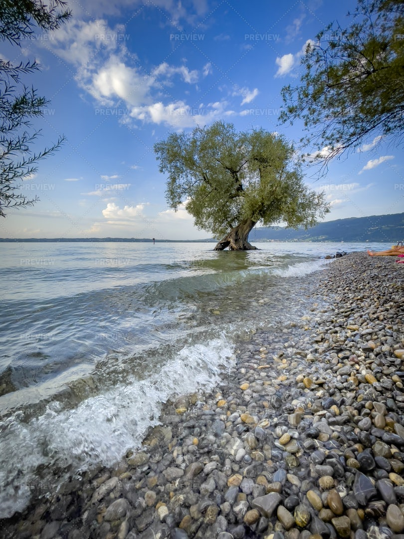 Lake Constance With A Single Tree: Stock Photos