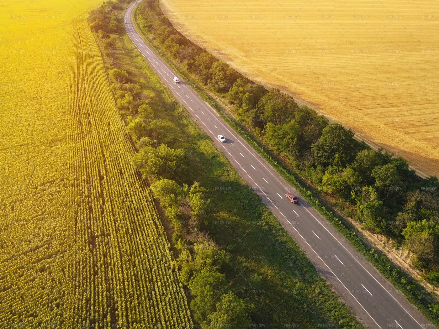 Road Between Fields: Stock Photos