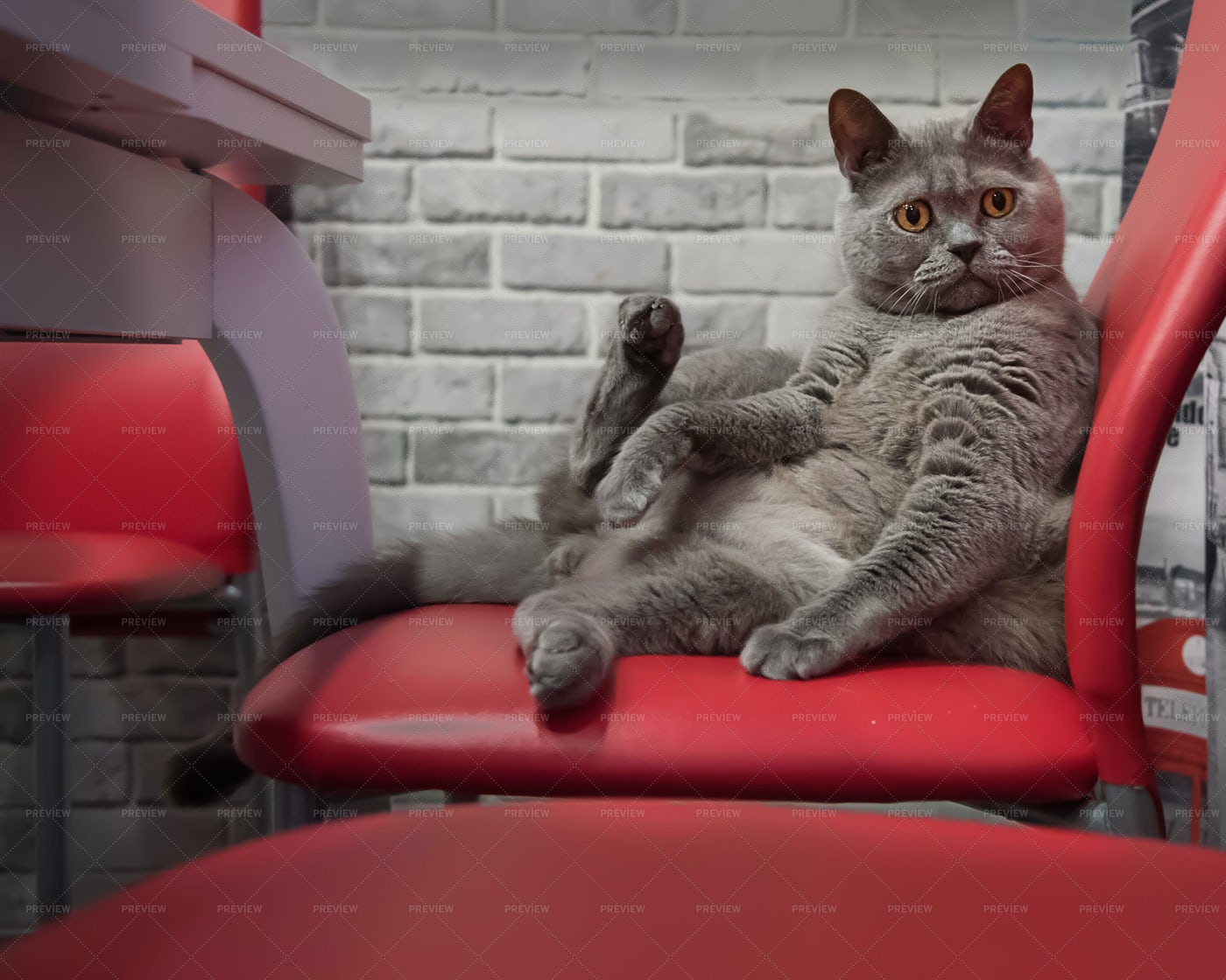 Cat Sitting On Chair: Stock Photos