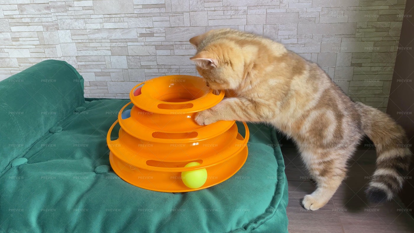 Kitten Playing With Cat Toy: Stock Photos
