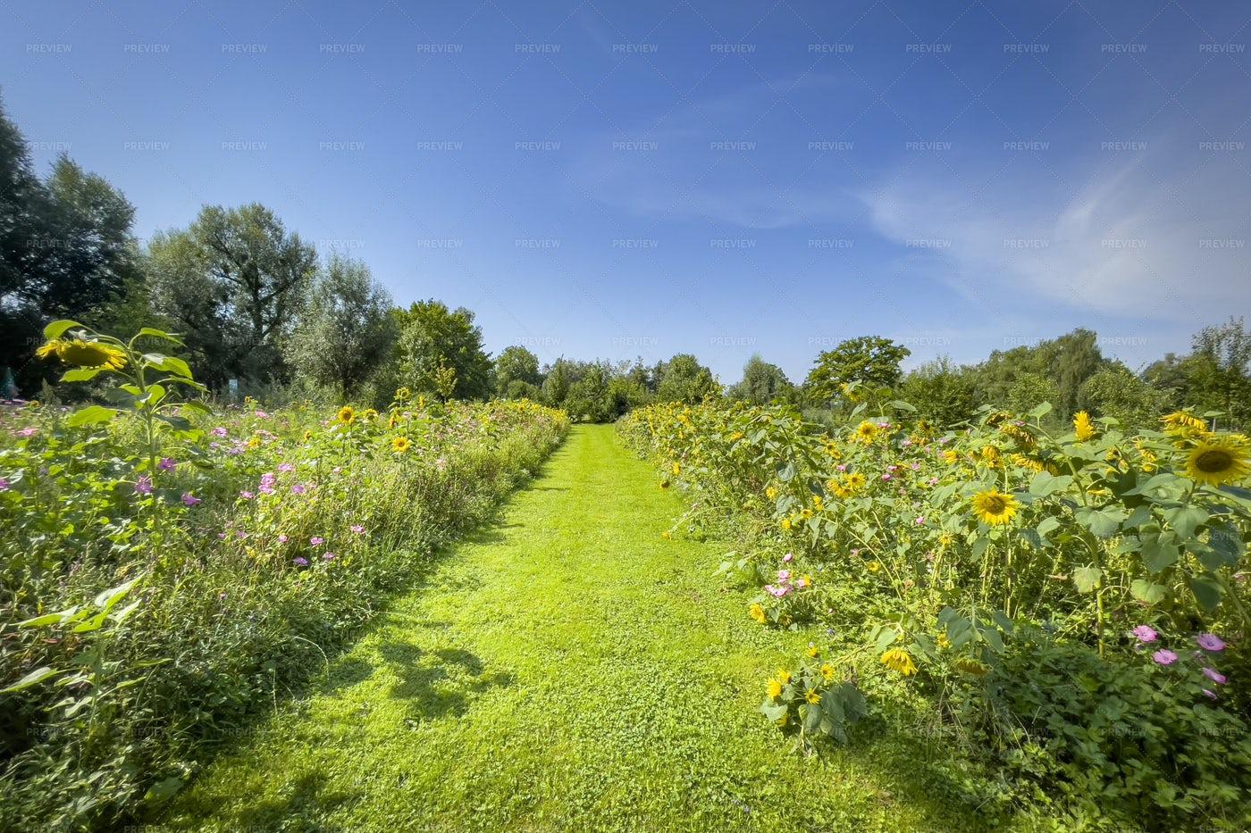 Flowers Meadow: Stock Photos