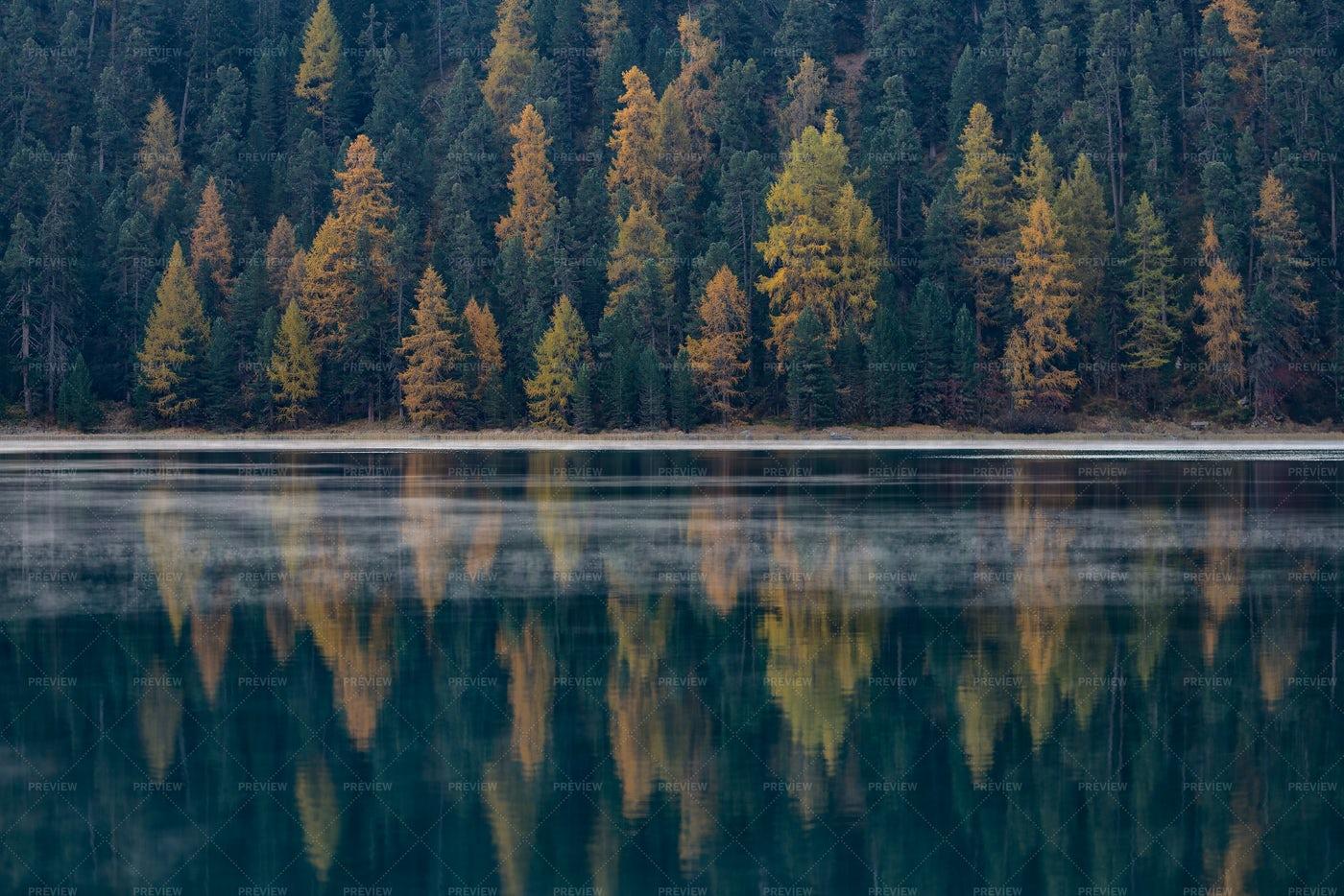 Autumn Forest: Stock Photos