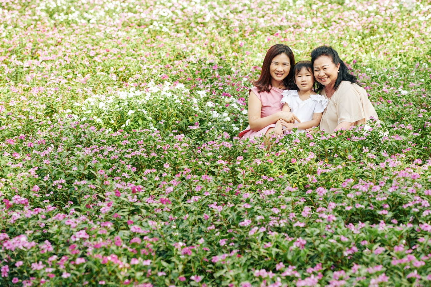 Family Sit In A Flowers Field: Stock Photos