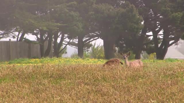 Two Deer On The Field: Stock Video