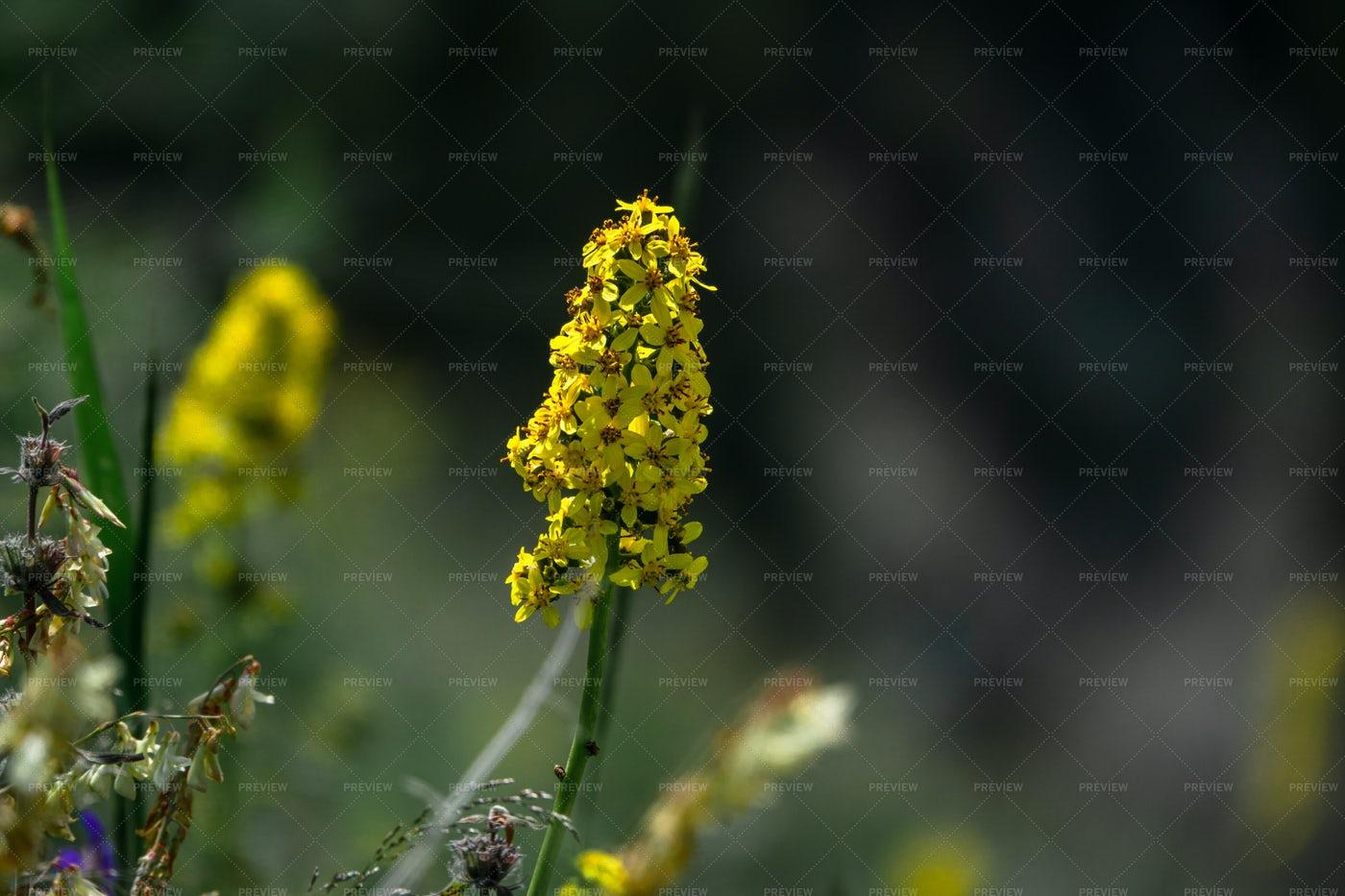 Small Mountain Yellow Flower: Stock Photos