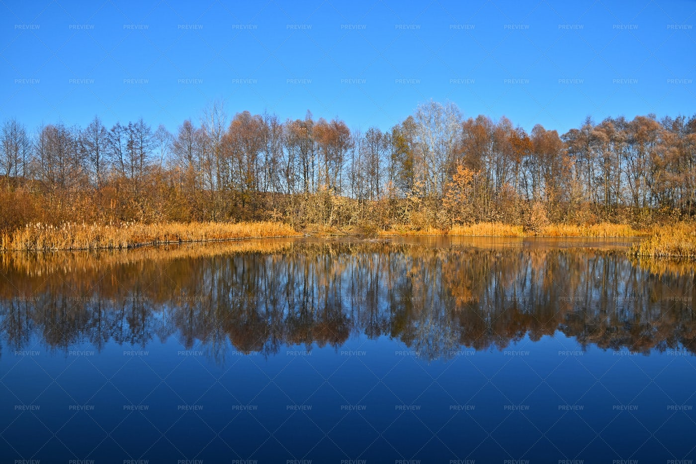 Autumn Trees Reflection In Lake: Stock Photos