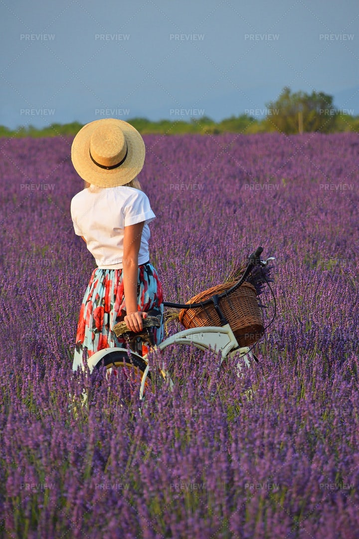 Woman With Bicycle In Lavender Field: Stock Photos