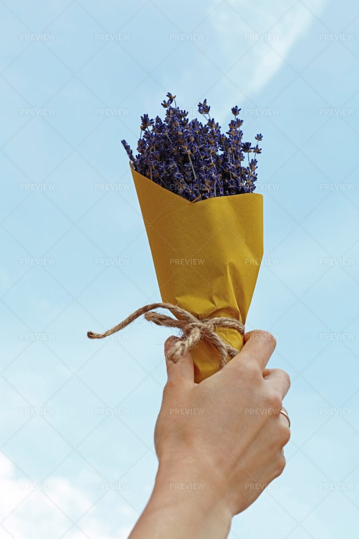 Hand Holding A Lavender Bouquet: Stock Photos