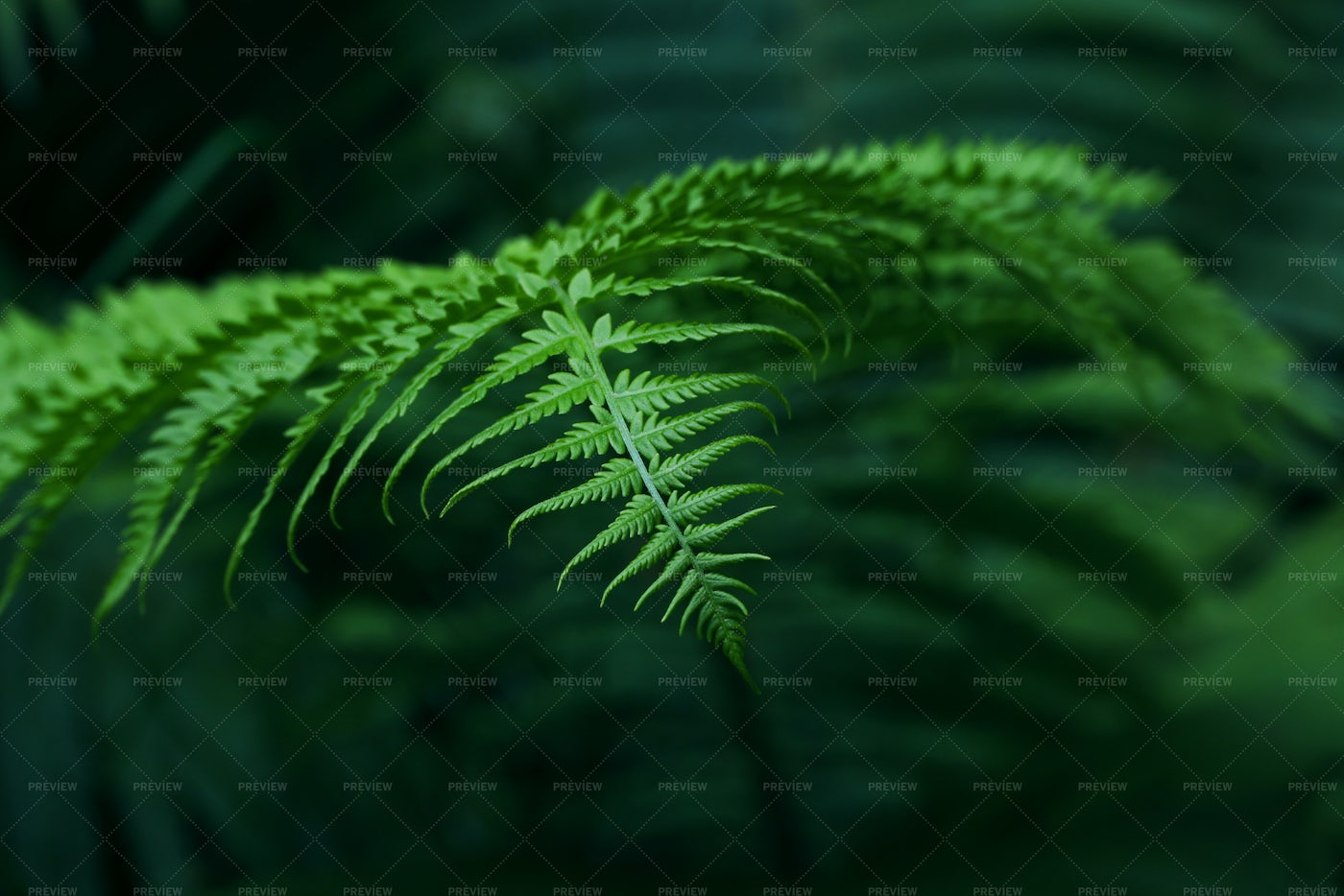 Background Of Green Fern Leaves: Stock Photos