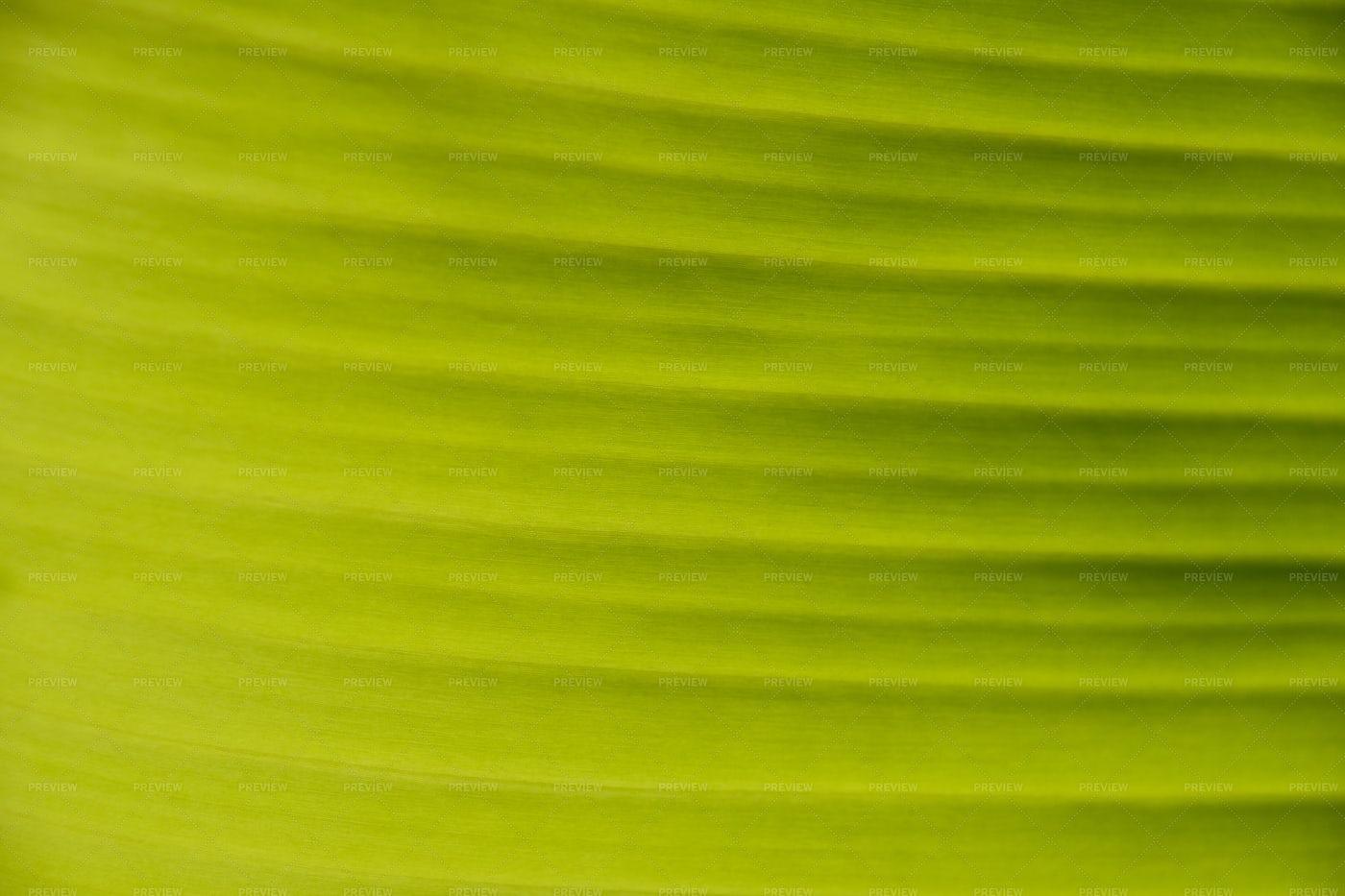 Green Palm Leaf: Stock Photos