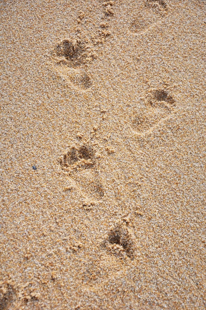 Child Footprints In Sand: Stock Photos