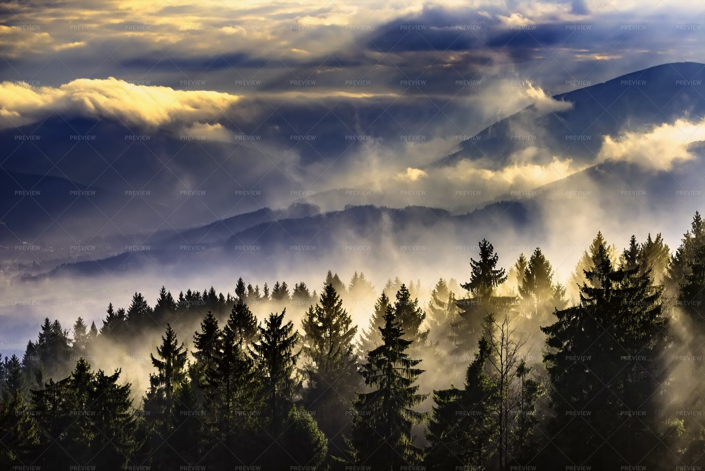 Foggy Landscape With Trees: Stock Photos