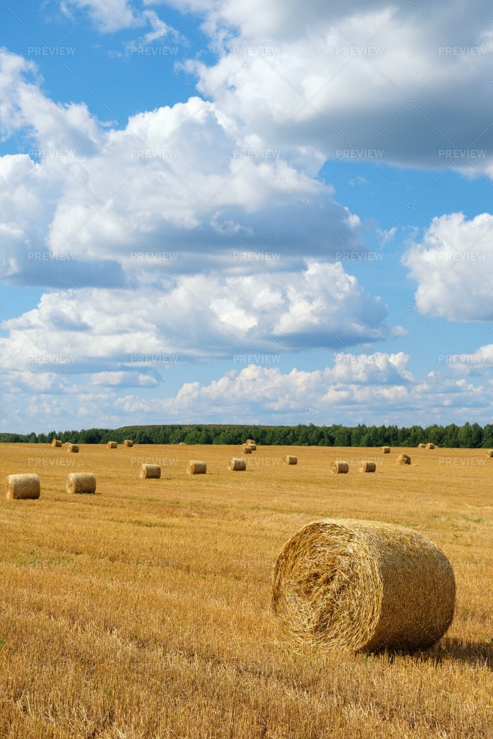 Haystacks On The Field: Stock Photos
