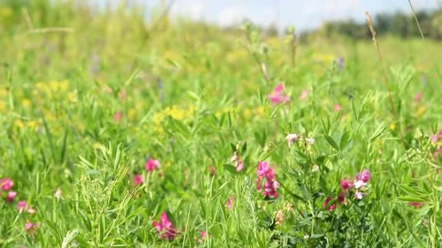 Beautiful Meadow With Colorful Flowers: Stock Video