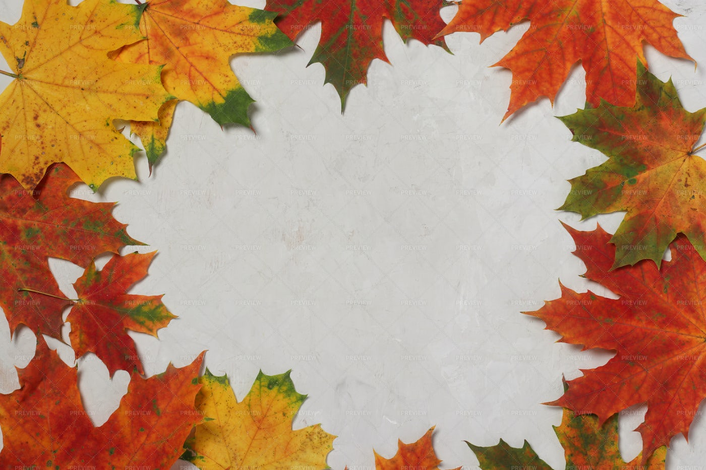 Autumn Leaves Frame: Stock Photos