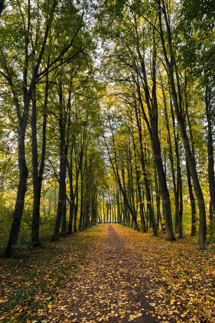 Pathway Among Trees: Stock Photos