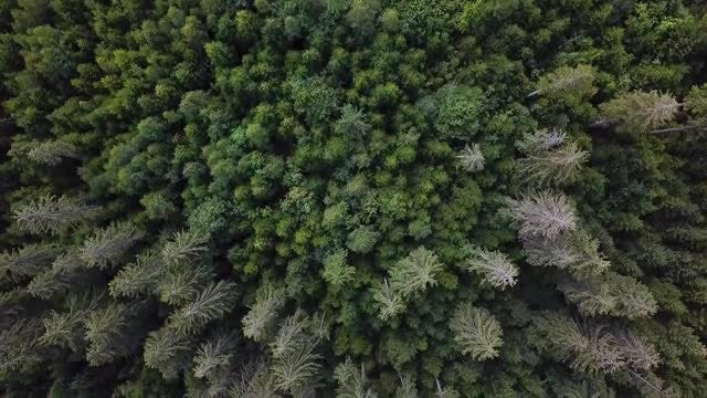 Green Forest Aerial Top View : Stock Video