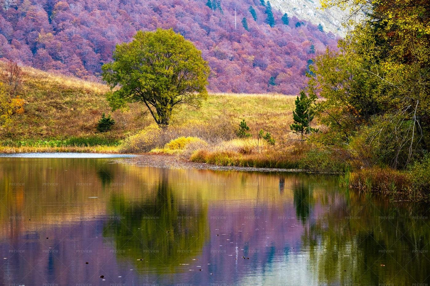 Purple Lake: Stock Photos
