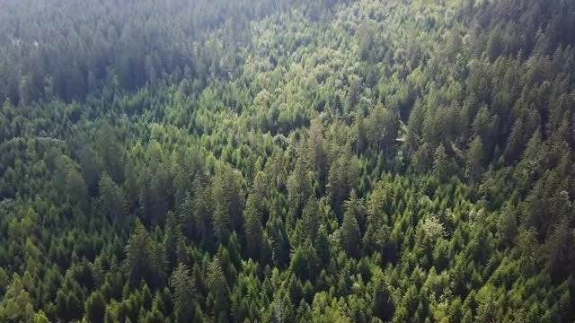 Amazing Aerial View Of Forest: Stock Video