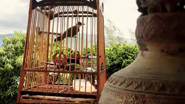 Bird In Cage: Stock Video