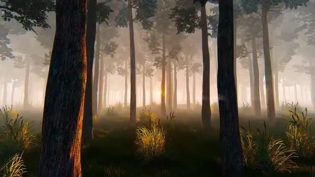 Morning In A Pine Forest: Stock Motion Graphics